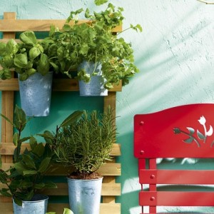 Tips For Growing Herbs In A Container